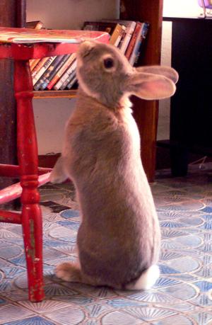 Bunny1_5