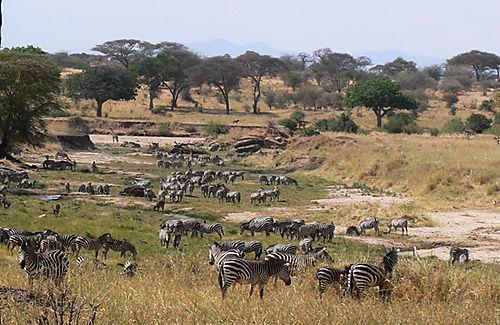 14 Herd